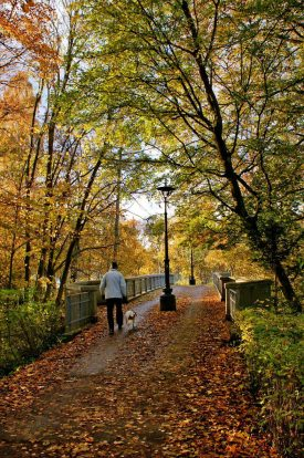 Walking the dog in the park autumn foliage 1600px